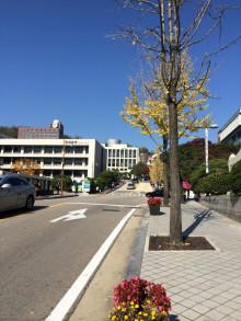 đường trong trường đại học Sungkyunkwan
