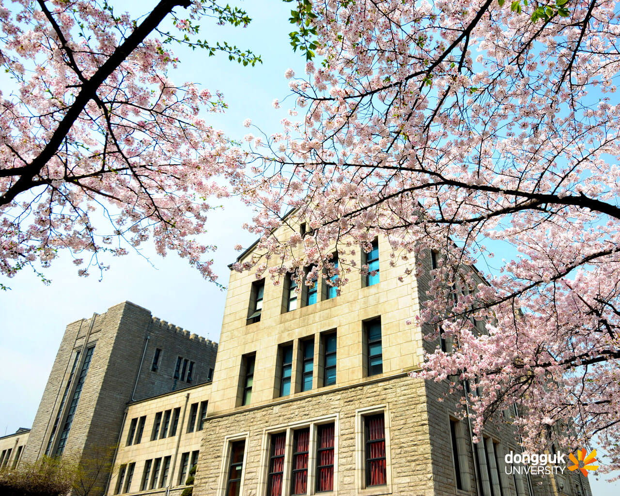 Học tại đại học Dongguk: Chi phí thuê bên ngoài có đắt không?