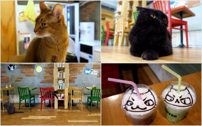 Cat-Cafe-Seoul-700x438