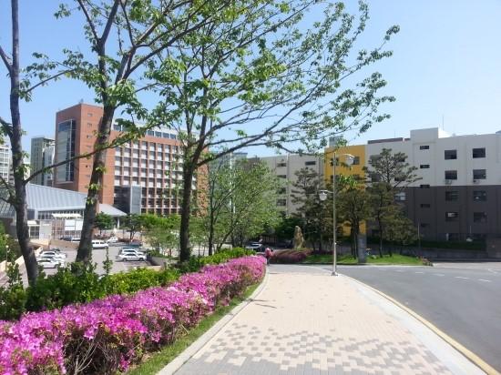Đại học Kyungsung – môi trường học tập tốt ở Busan