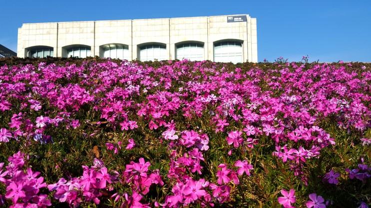 Vài nét về du học Hàn Quốc - trường đại học Yonsei
