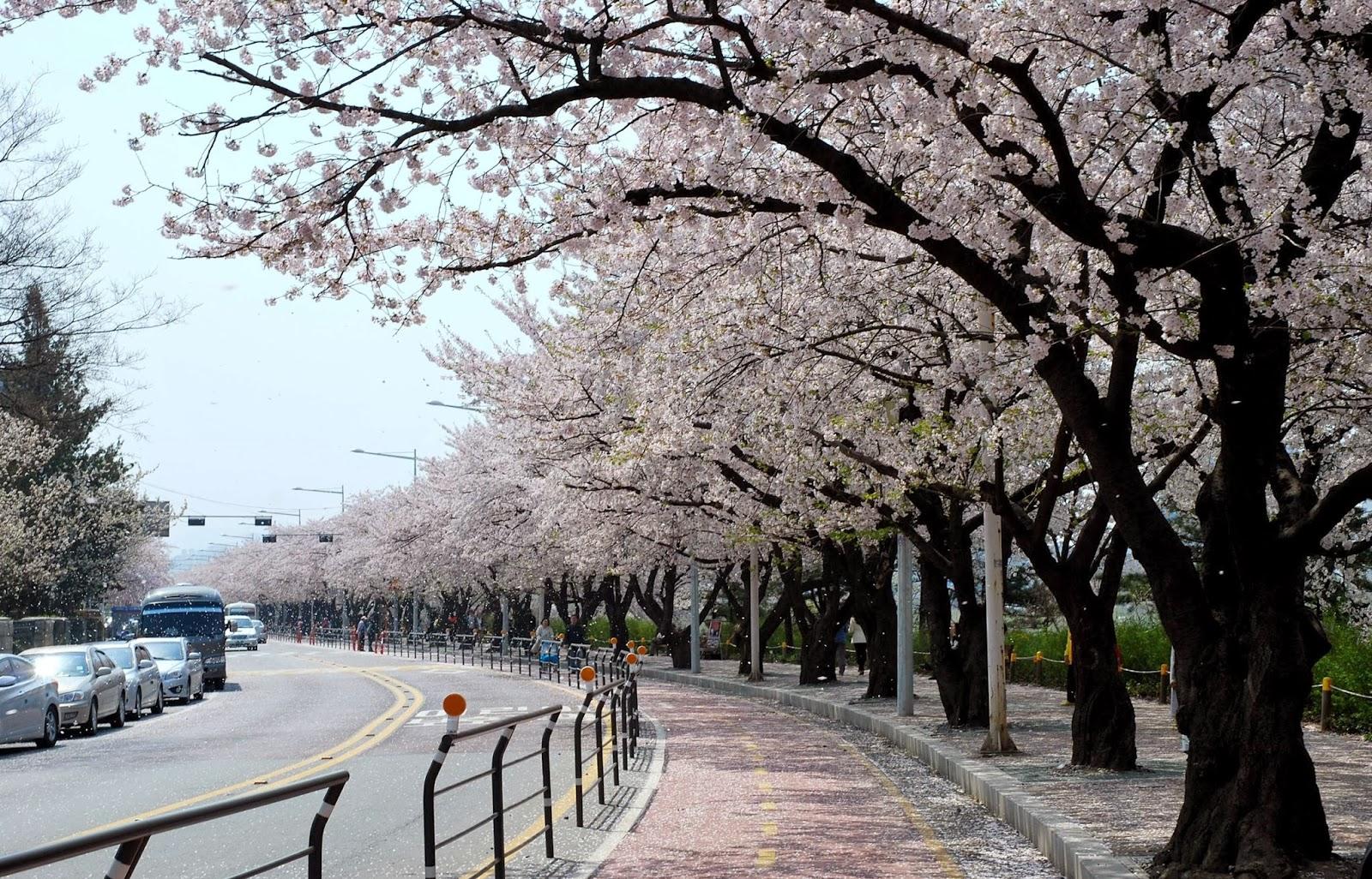 Yunjungno-Road