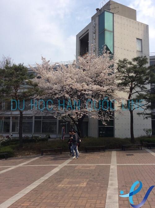 Chuyến công tác đến thăm trường đại học Catholic ngày 16/4/2017
