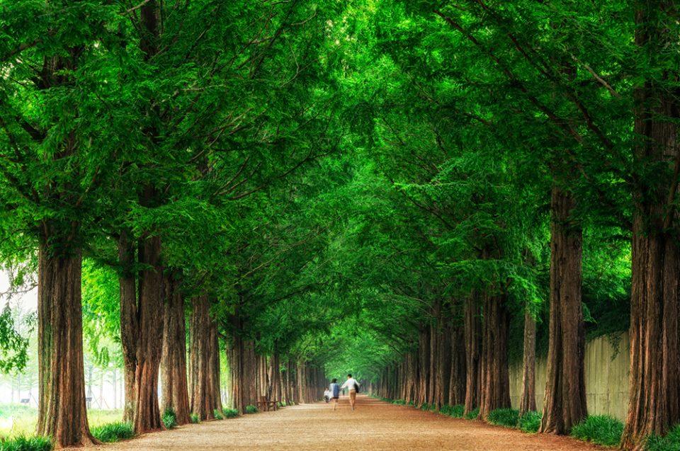 Thăm thú 3 con đường mệnh danh đẹp nhất xứ Hàn