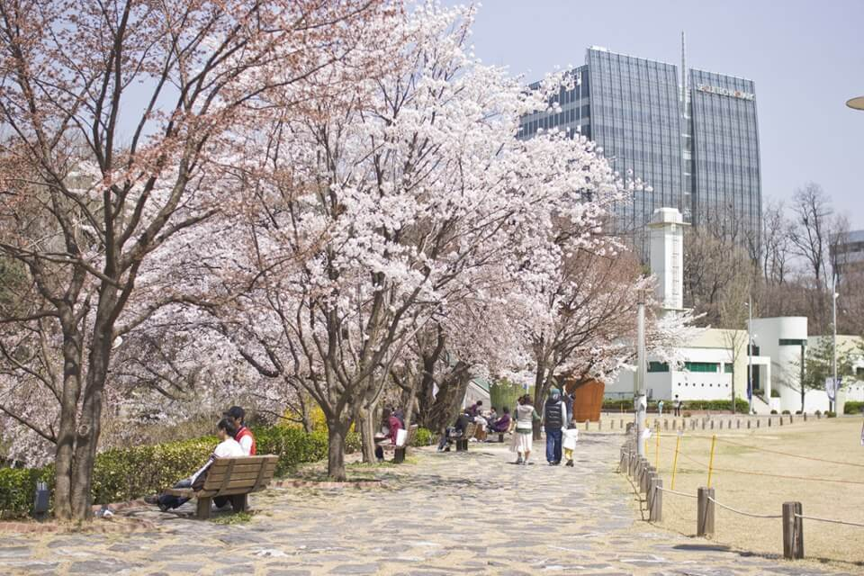 Cùng du học sinh chuẩn bị hồ sơ du học Hàn Quốc đại học Seoul