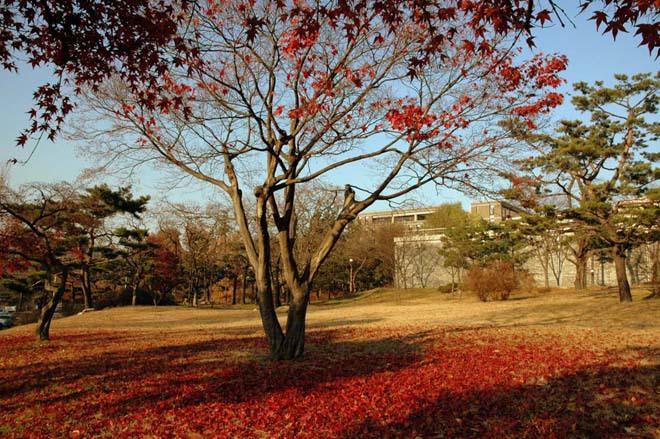Con đường Nakseongdae's Garosu-gil