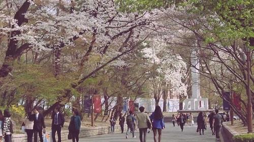 Nét quyến rũ của trường đại học Kyung Hee Hàn Quốc