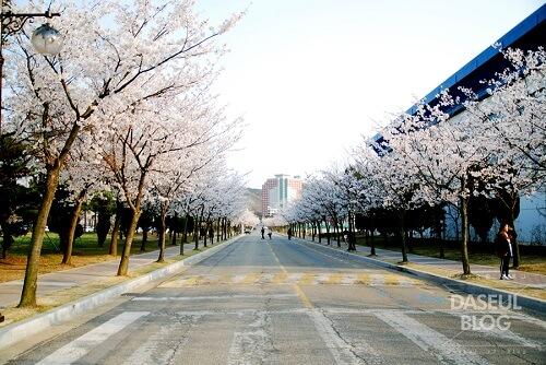 Thông tin thêm về khuôn viên trường đại học Hanyang