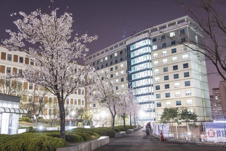 Cấu trúc chương trình du học tiến sĩ tại Hàn Quốc