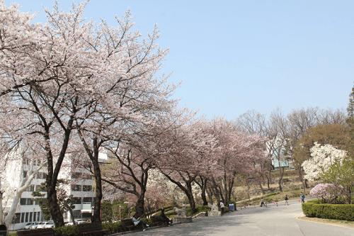 Cuộc sống sinh viên thú vị tại trường đại học Yonsei Hàn Quốc