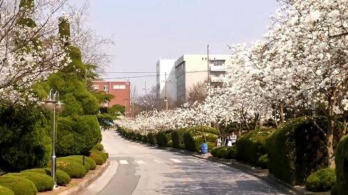 4 chương trình đào tạo tuyệt vời của trường đại học Wonkwang