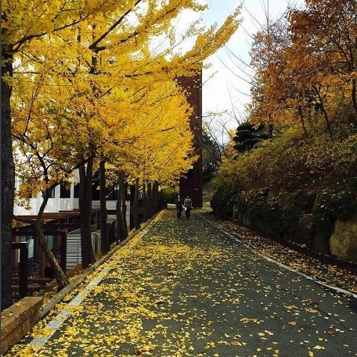 Giới thiệu thông tin du học trường đại học Dongseo ở Busan