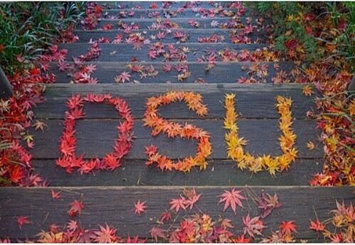 Đại học Dongseo: Cơ hội du học Hàn Quốc bằng tiếng Anh cho học sinh