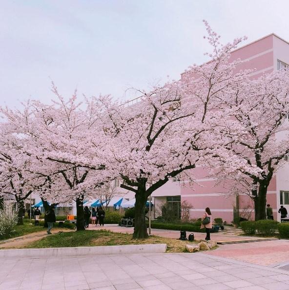 Du học Hàn Quốc tự túc: Chuẩn bị sẵn sàng tâm lý cho sự thay đổi