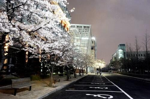 Hàn Quốc qua góc nhìn của du học sinh trường Kookmin