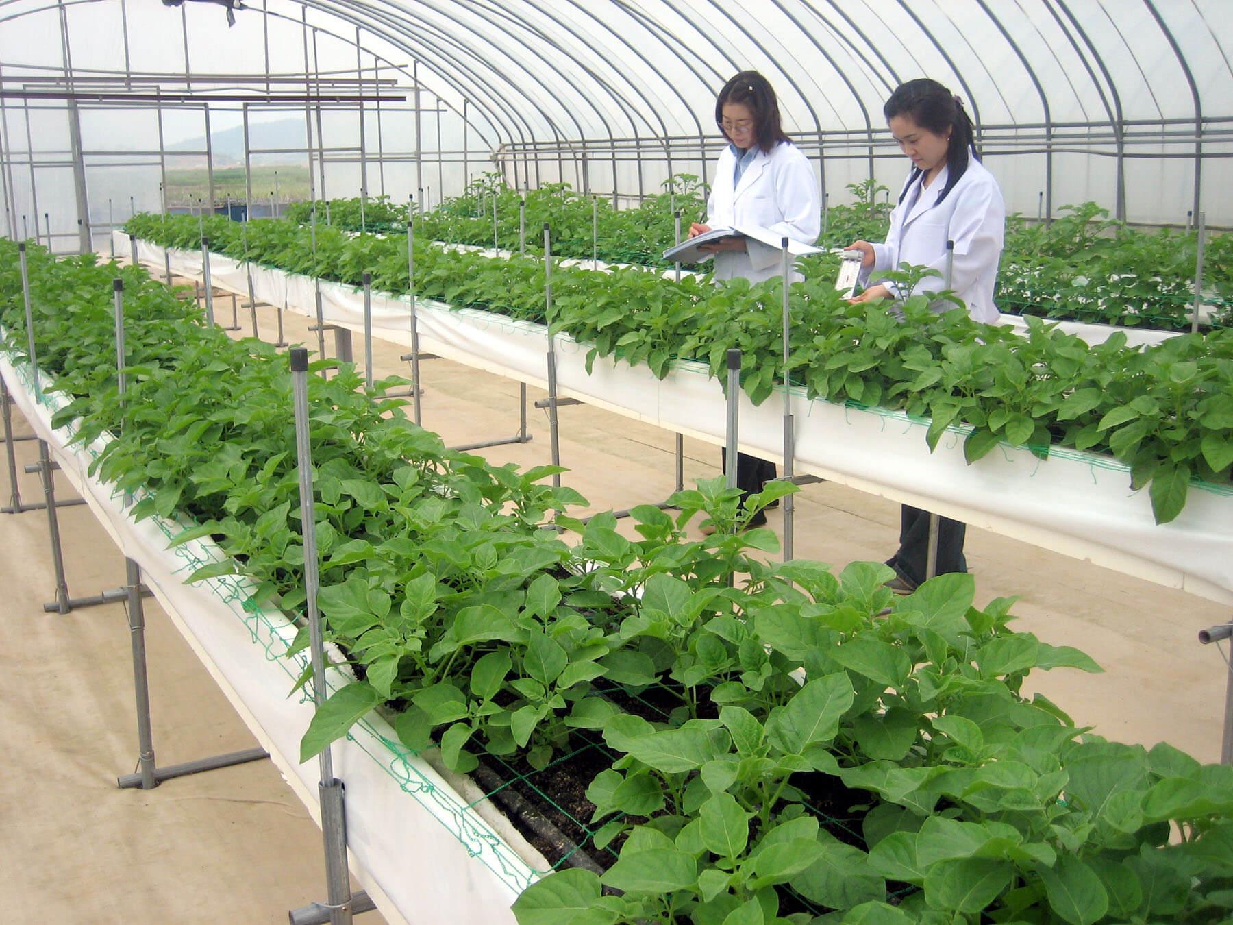 Lựa chọn du học ngành nông nghiệp trường đại học Seoul có tốt không?