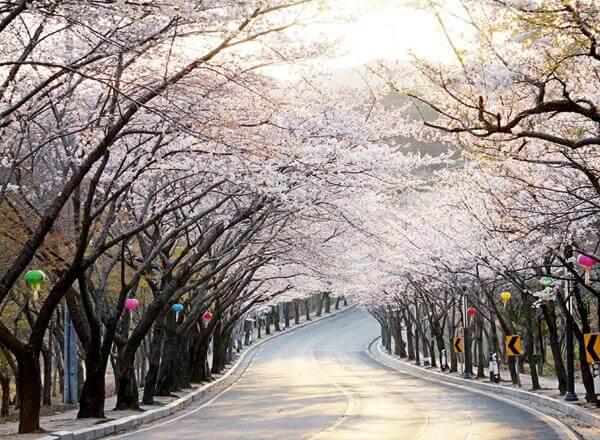 Khám phá nét đẹp 4 mùa của xứ sở kim chi