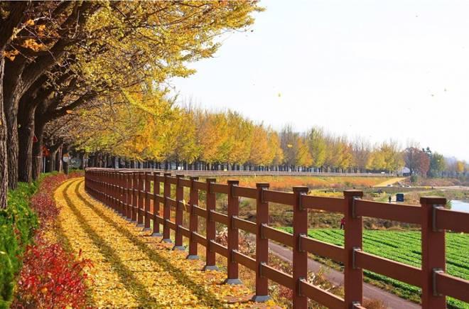 Cùng line du học ngắm lá vàng rơi tại đất nước Hàn Quốc