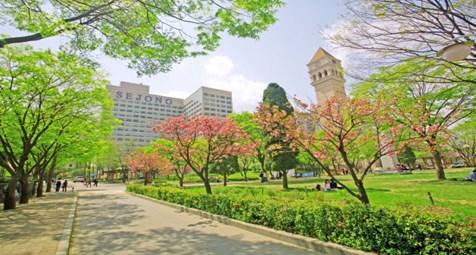 Nhóm ngành nổi bật của trường đại học Sejong là gì?